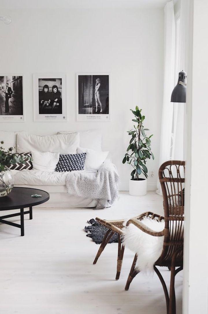 nordic style plant
